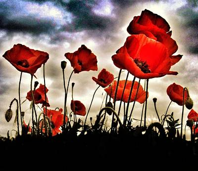 Vision Photograph - Poppy Field  by Marianna Mills