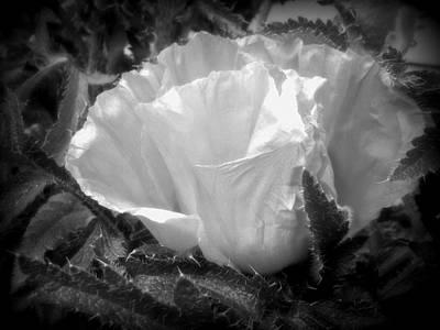Poppy Flower 2 Art Print by Heather L Wright