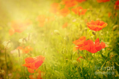 Poppy Flower Print by Mythja  Photography