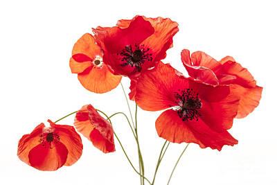 Poppy Flowers  Print by Elena Elisseeva