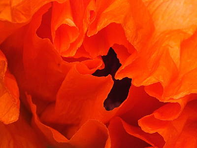 Photograph - Poppy by Gene Cyr