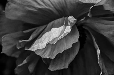 Poppy In Black And White May 2011 Art Print by Joseph Duba