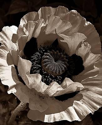 Poppy In Browns Art Print