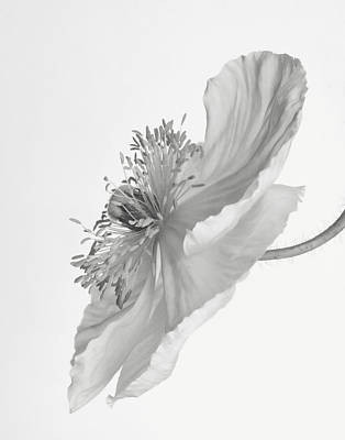 Photograph - Poppy In Monochrome by David and Carol Kelly