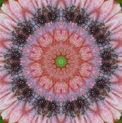Digital Art - Poppy In My Garden by Trina Stephenson
