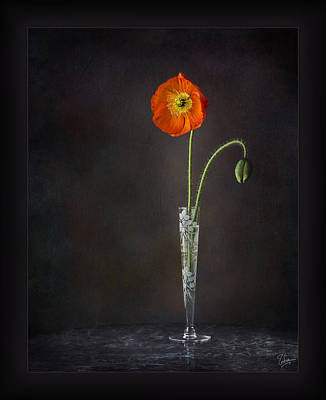 Photograph - Poppy In Vase by Endre Balogh