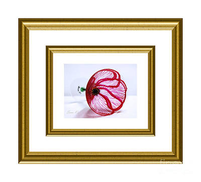 Painting - Poppy In White And Gold Frame by Oksana Semenchenko
