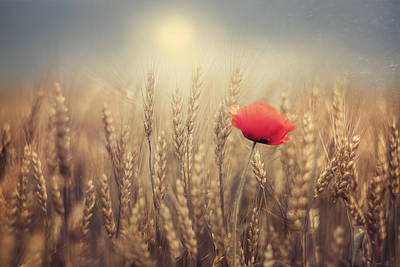Wheat Photograph - Poppy by Magda  Bognar