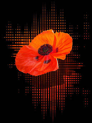 Photograph - Poppy Passion by Gill Billington