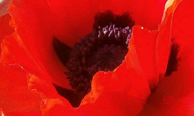 Photograph - Poppy Passion by J R Baldini Master Photographer