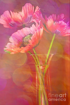 Bright Colors Photograph - Poppy Passion by Jan Bickerton