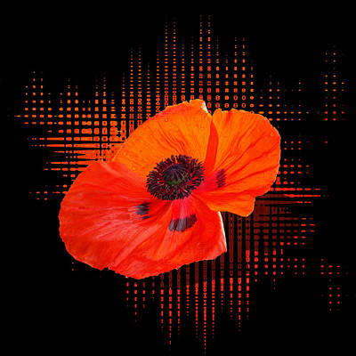 Photograph - Poppy Passion Square by Gill Billington