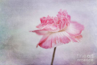 Poppy Poem Art Print by Priska Wettstein