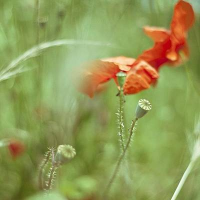 Follow Wall Art - Photograph - #poppy #poppies #red #green by Georgia Fowler