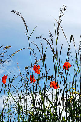 Photograph - Poppy Power by Wendy Wilton