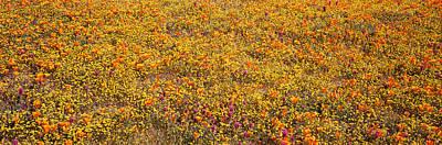 Poppy Reserve Mojave Desert Ca Usa Art Print