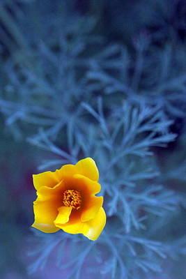 Minnesota Grown Photograph - Poppy by Sarah Bergan