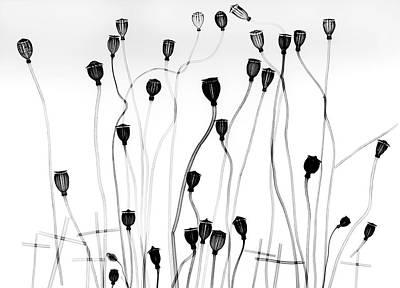 Seedhead Photograph - Poppy Seedheads by Albert Koetsier X-ray