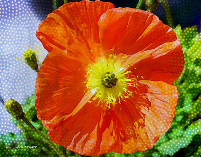 Manipulation Photograph - Poppy Series - Opened To The Sun by Moon Stumpp