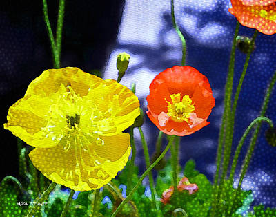 Manipulation Photograph - Poppy Series - Soaking Up Sunbeams by Moon Stumpp