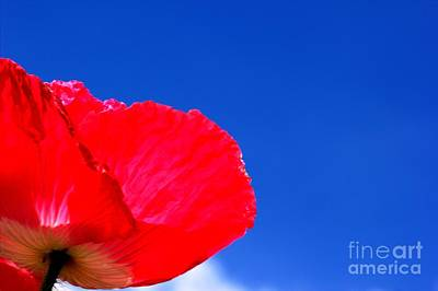 Art Print featuring the photograph Poppy Sky by Baggieoldboy
