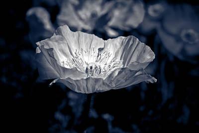 Poppy Sunlight Original