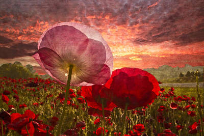 Poppy Sunrise Print by Debra and Dave Vanderlaan