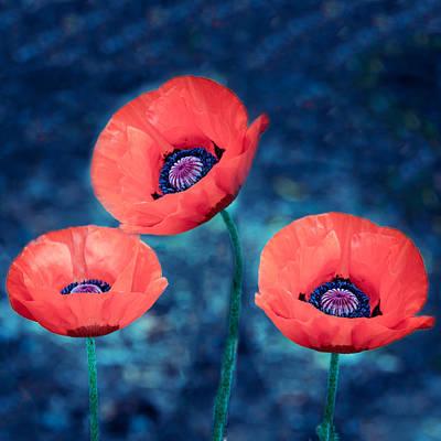 Photograph - Poppy Trio by Ludmila Nayvelt