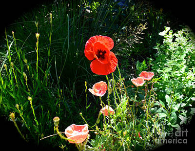Photograph - Poppy'n At You by Luther Fine Art