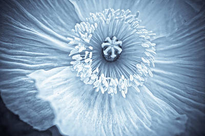Photograph - Poppy's Ghost by Ronda Broatch