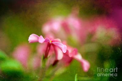 Digital Art - Popsicle Pink by Lois Bryan
