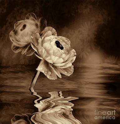 Photograph - Poppy Fantasy In Sepia by Shirley Mangini