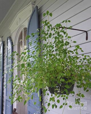 Photograph - Porch St Francisville La  by Lizi Beard-Ward