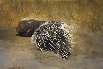 Photograph - Porcupine  by Betty  Pauwels