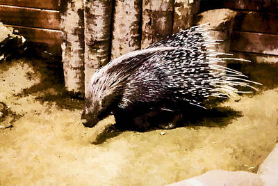 Digital Art - Porcupine  by Photographic Art by Russel Ray Photos