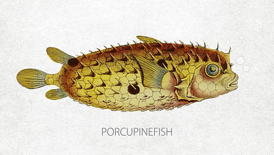 Blowfish Digital Art - Porcupinefish by Aged Pixel