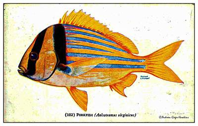 Digital Art - Porkfish 1932 Vintage Postcard by Audreen Gieger