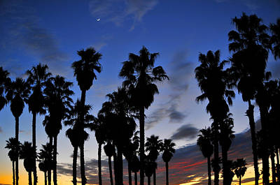 Photograph - Port Hueneme Palm Sunset by Lynn Bauer