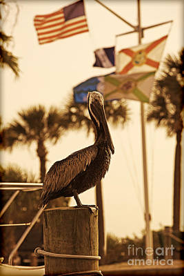 Photograph - Port Pelican by Kelly Morrow