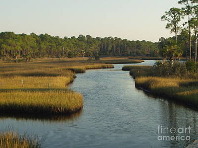 Photograph - Port St Joe Marsh by Audrey Peaty