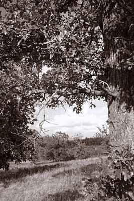 Photograph - Portal Of Oak by Nina Fosdick