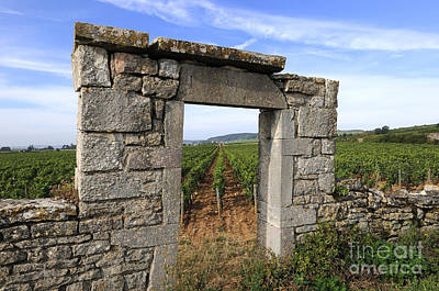 Grapevines Photograph - Portal Of Vineyard In Burgundy Near Beaune. Cote D'or. France. Europe by Bernard Jaubert