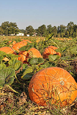 Photograph - Porters Pumpkin Patch by Paulette B Wright