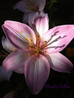 Photograph - Portia Pink Lily II by Cleaster Cotton
