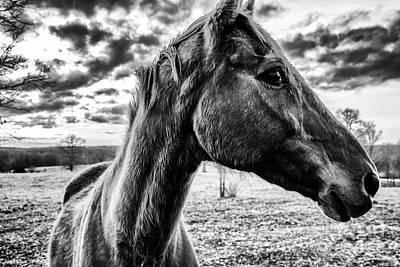 Photograph - Portrait After The Storm by Julie Clements