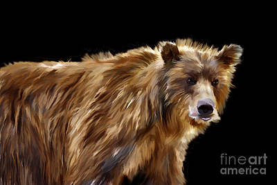 Photograph - Portrait Brown Bear by Dan Friend
