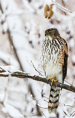 Winter In Montreal Photograph - Portrait Of A Bird Sitting On A Tree by Dominic Marcoux