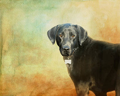 Portrait Of A Black Labrador Retriever Art Print