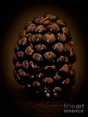 Photograph - Portrait Of A Blackberry by Patricia Bainter