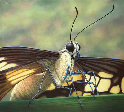 Animal Wall Art - Painting - Portrait Of A Butterfly by James W Johnson